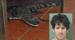 man accused of tossing gator